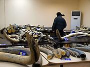 Internationale Mammut Auktion in der sibirischen Stadt Jakutsk. Jakutsk hat 236.000 Einwohner (2005) und ist Hauptstadt der Teilrepublik Sacha (auch Jakutien genannt) im Foederationskreis Russisch-Fernost und liegt am Fluss Lena. Jakutsk ist im Winter eine der kaeltesten Grossstaedte weltweit mit durchschnittlichen Winter Temperaturen von -40.9 Grad Celsius. Die Stadt ist nicht weit entfernt von Oimjakon, dem Kaeltepol der bewohnten Gebiete der Erde.<br /> <br /> International Mammoth auction in the Siberian city Yakutsk. Yakutsk is a city in the Russian Far East, located about 4 degrees (450 km) below the Arctic Circle. It is the capital of the Sakha (Yakutia) Republic (formerly the Yakut Autonomous Soviet Socialist Republic), Russia and a major port on the Lena River. Yakutsk is one of the coldest cities on earth, with winter temperatures averaging -40.9 degrees Celsius.
