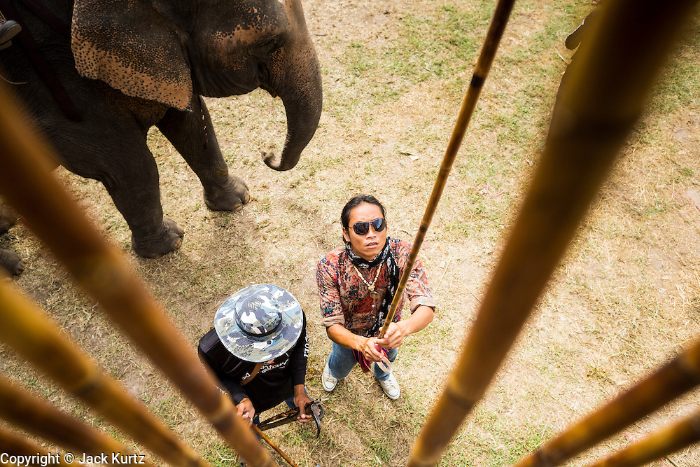 """29 AUGUST 2013 - HUA HIN, PRACHUAP KHIRI KHAN, THAILAND: A mahout picks a mallet before an elephant polo game at the King's Cup Elephant Polo Tournament in Hua Hin. The tournament's primary sponsor in Anantara Resorts and the tournament is hosted by Anantara Hua Hin. This is the 12th year for the King's Cup Elephant Polo Tournament. The sport of elephant polo started in Nepal in 1982. Proceeds from the King's Cup tournament goes to help rehabilitate elephants rescued from abuse. Each team has three players and three elephants. Matches take place on a pitch (field) 80 meters by 48 meters using standard polo balls. The game is divided into two 7 minute """"chukkas"""" or halves. There are 16 teams in this year's tournament, including one team of transgendered """"ladyboys.""""    PHOTO BY JACK KURTZ"""