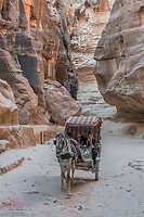 Petra, Jordan - May 11, 2013: people in horse cart at the Siq path in Nabatean Petra Jordan