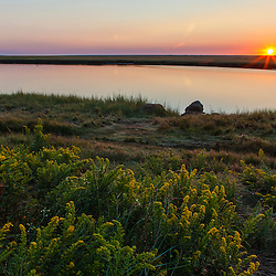Goldenrod at sunrise next to a salt marsh at Fort Hill in the Cape Cod National Seashore. Eastham, Massachusetts.