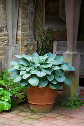 Hosta in terracotta pot in The Italian Shelter at Hidcote Manor Garden