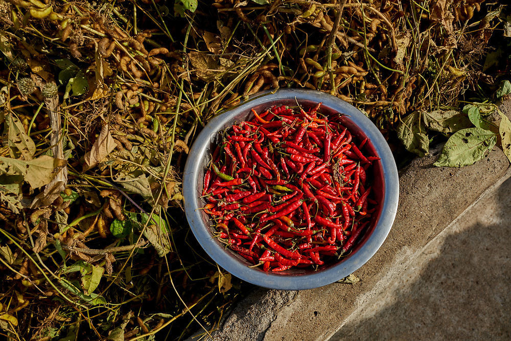 25/10/2019 / Ghana: <br /> <br /> A bowl of pepper harvested from the farm of Lucy and Thomas in Yabrago<br /> Oxfam GB has raised enough money to build two new water pumps in Yabrago and Kugashego both very deprived communities in the Garu Tempane District of the Upper East Region.  A solar powered pump will make it possible for some of the community members to farm vegetables during the dry season, whilst providing community members with clean water all year round.