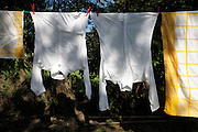 washing line with white shirts hanging to dry