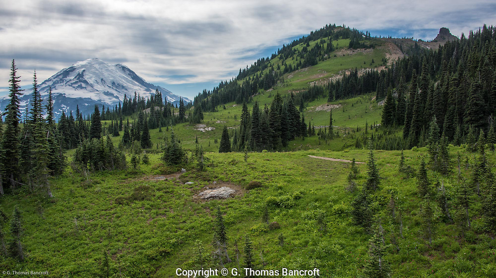 Subalpine meadow at base of Naches Peak with Mt Rainier in the background.