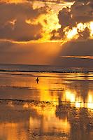 Seaweed gatherer in golden light dawn off Sanur Beach in Bali, Indonesia