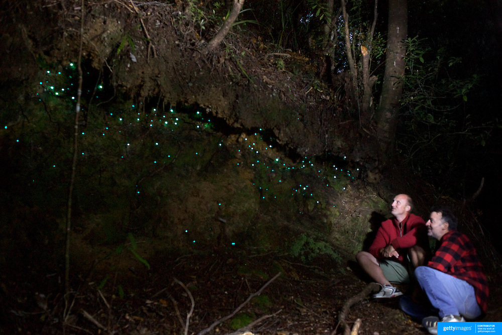 Damian Johansen (left) shows the Night Glowworms during a night walk in the Coromandel Forest with Wincorp Adventures. Coromandel, New Zealand, 1st December 2010. Photo Tim Clayton.