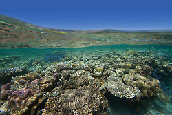 """Corals in the shallows of """"The Aquarium"""" in Clerke Lagoon at the Rowley Shoals."""