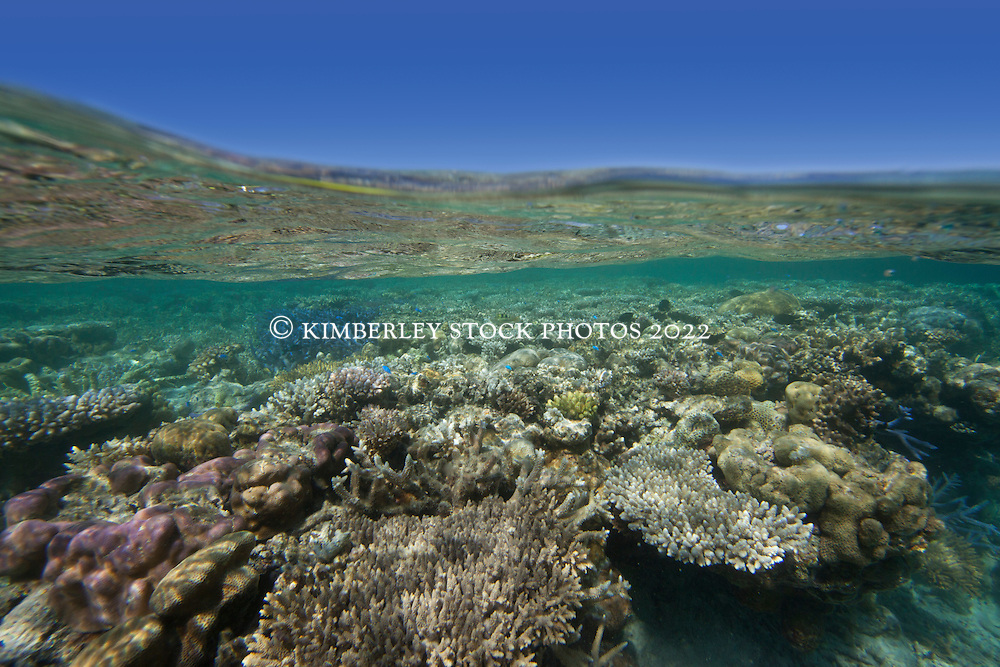 "Corals in the shallows of ""The Aquarium"" in Clerke Lagoon at the Rowley Shoals."