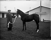 20/11/1956<br /> 11/20/1956<br /> 20 November 1956<br /> November Bloodstock sales at the RDS, Ballsbridge, Dublin. Picture shows one of the horses on sale at the event.
