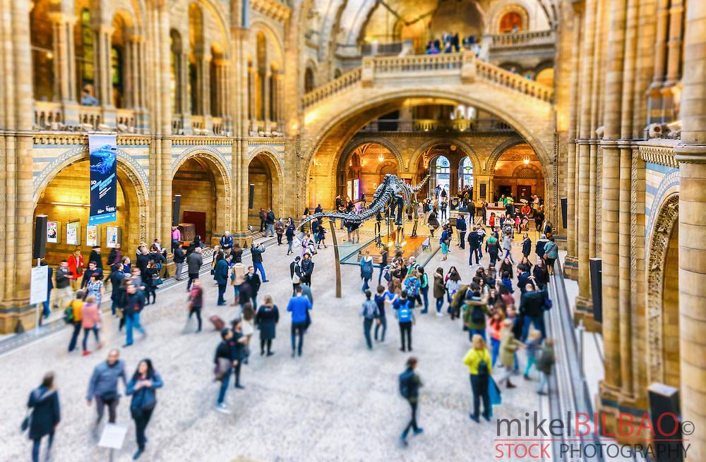 Natural History Museum. London, England, United kingdom, Europe.