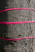 Three strands of pink ribbon (holding up a home-made sign) on a north Somerset farm.