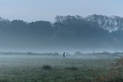 © Licensed to London News Pictures. 25/10/2016. Calais, France.  A migrant walks through a mist covered field at sunrise, near the migrant and refugee camp in Calais, known as the 'Jungle'. French authorities have moved thousands of refugees and migrants living at the makeshift living area on the French coast, with some still refusing to leave. . Photo credit: Ben Cawthra/LNP