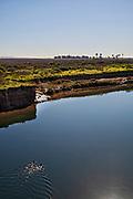 Bolsa Chica Ecological Reserve, Huntington Beach, Orange County, California, USA