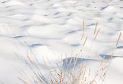 Snow Waves