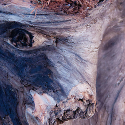 Driftwood at Cape Disappointment State Park, Ilwaco, Washington, US
