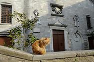 Cat in front of the 14th century Crkva Rođenja Blažene Djevice Marija (Church of the Blessed Virgin Mary's Birth), Labin, Istria, Croatia © Rudolf Abraham