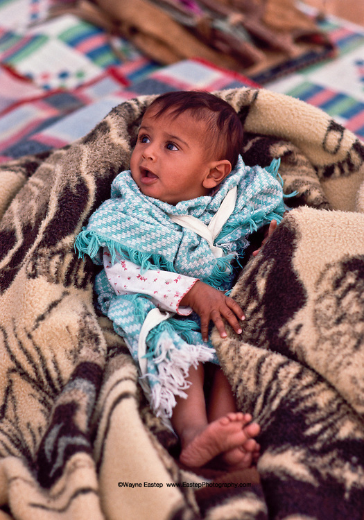 An Alamrah baby in the Dahana Sands in the Eastern Provice of Saudi Arabia