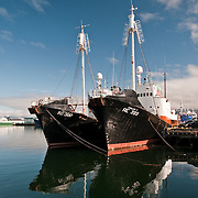 Icelandic Whaling Boats in the Harbor at Reykjavik, Iceland