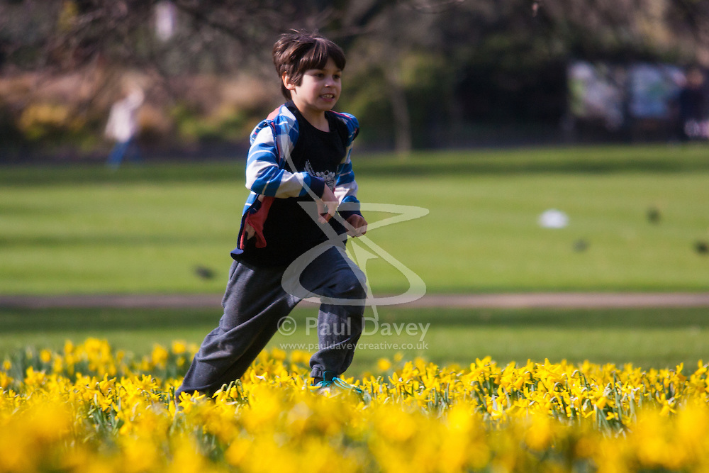 London, March 6th 2015. Londoners and tourists enjoy the warm sunshine in St James's Park as daffodils bloom, heralding the approach of spring. PICTURED: Exuberant nine-year-old Rowan runs through the daffodils.