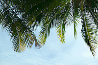 Palm fronds and sky in Thailand&#xA;<br />