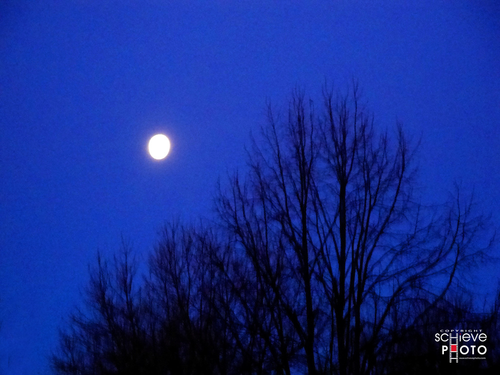 Morning moon over bare trees.