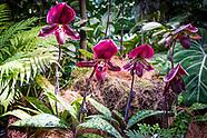 Day 11 Singapore Botanical Gardens-Home