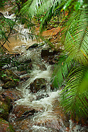 Stream running through the Daintree Rain Forest.