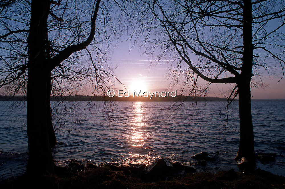 Sunset between trees at Rutland Water, Rutland, England, UK.