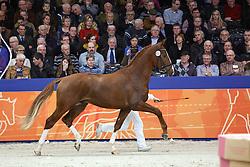 651 - Lens V<br /> KWPN Stallion Selection - 's Hertogenbosch 2014<br /> © Dirk Caremans