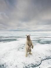 Svalbard #36 2017
