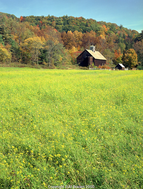 Yellow Field near Connecticut River on River Rd. Putney, VT