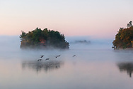https://Duncan.co/geese-in-flight-and-morning-fog