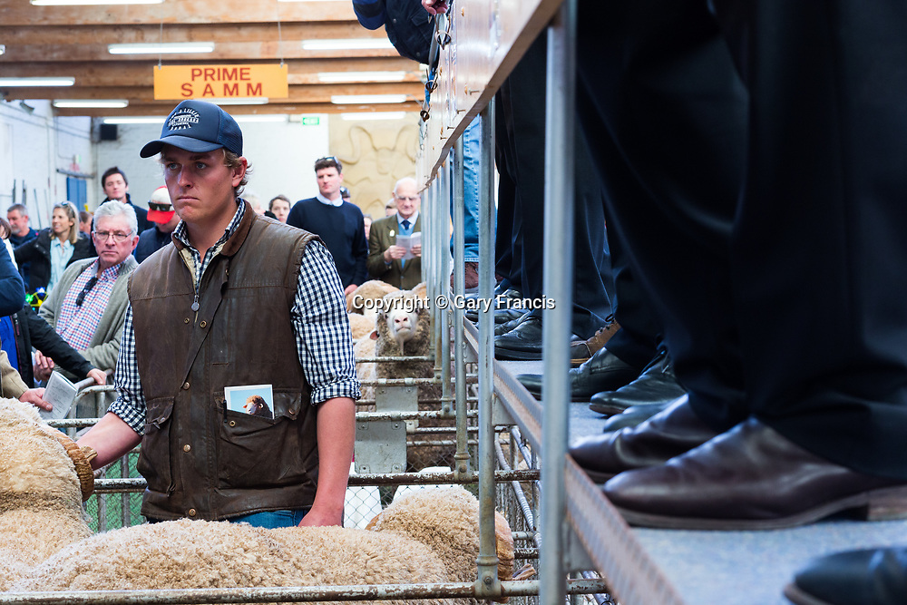 2017 SA Stud Merino and Poll Merino Ram Sale at the Stud Sheep Pavilion, Adelaide Showground on Friday 8th of September 2017