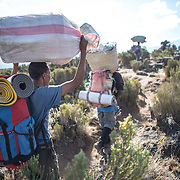 Porters on the trail in the heath zone between Shira 1 Camp and Moir Hut Camp on Mt Kilimanjaro's Lemosho Route.