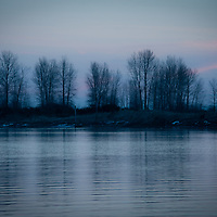 A line of trees with bare branches against a blue and pink winters sunset with water in foreground.