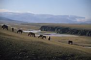 Mongolia. road from avrakaer to uyanga  Uyanga, ovokangai province     /   route de avrakaer a Shuranga  Uyanga , ovokangai province  Mongolie  /      L0009905  /     P119778