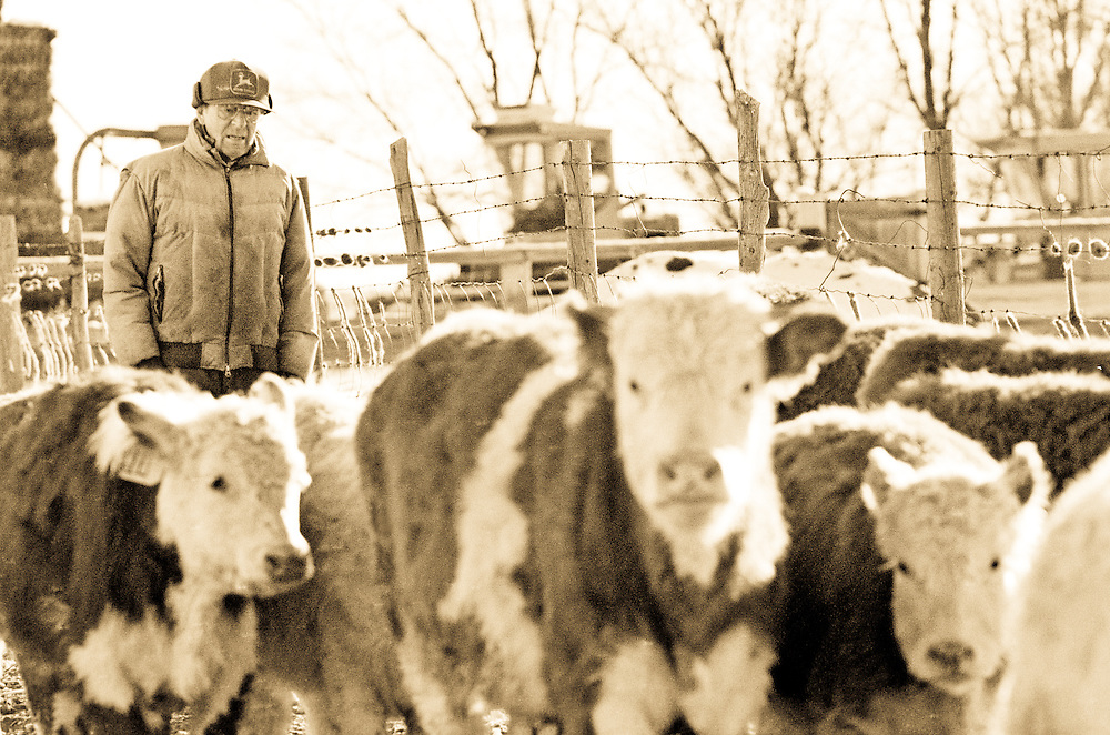 A farmer walks through his corral to feed his cattle during the winter in eastern Colorado.