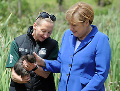 Auckland-Prime Minister John Key and German Chancellor Angela Merkel release kiwi
