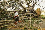 Pat Merritt of the Naples, Florida Parks Department walks October 26, 2005 through a giant banyan tree blocking the road toppled by Hurricane Wilma as city crews started to cut up the trees with chainsaws. The southwest Florida coast began the long process of cleanup from the storm that hit the region yesterday.