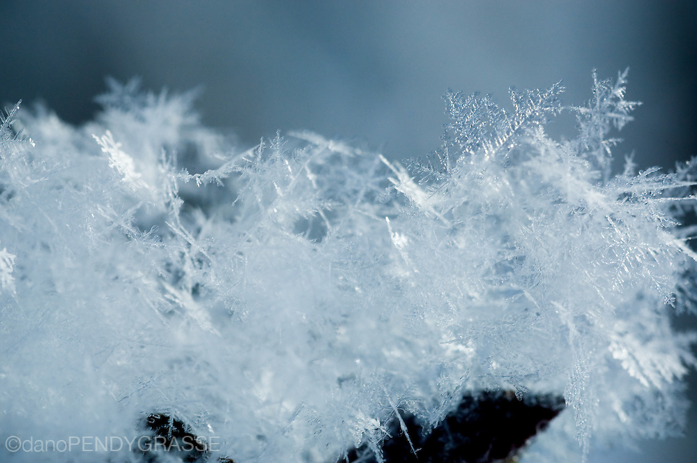 Snowflakes settle lightly on a tree branch near Revelstoke, British Columbia.