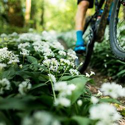 Mountainbiking Seasons