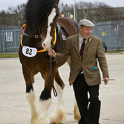 Mr R Sumner's  Bay Stallion  Wheathead Bowes Lyon   f 2002<br />