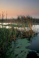 Misty morning light over tule reeds and water, Jones Tract, San Joaquin delta, near Stockton, California