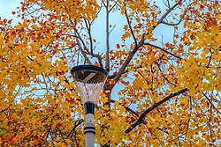 Autumn leaves against a pleasant blue sky, Toulouse, France<br /> <br /> (c) Andrew Wilson | Edinburgh Elite media