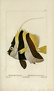 Heniochus from Histoire naturelle des poissons (Natural History of Fish) is a 22-volume treatment of ichthyology published in 1828-1849 by the French savant Georges Cuvier (1769-1832) and his student and successor Achille Valenciennes (1794-1865).