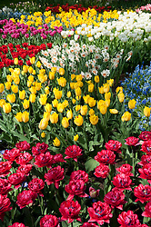Colourful flowers at Keukenhof Garden in Lisse The Netherlands April 2009