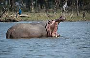 Kenyan Wildlife 2017