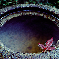 Maple leaf in a Japanese water basin at the Masumoto Inn, Kyoto, Japan