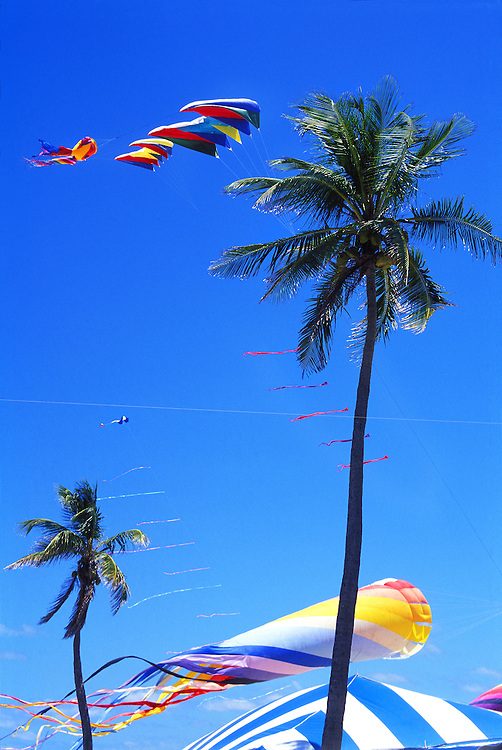 Against a blue sky, kites soar past palm trees during an international kite festivql in Miami Beach.