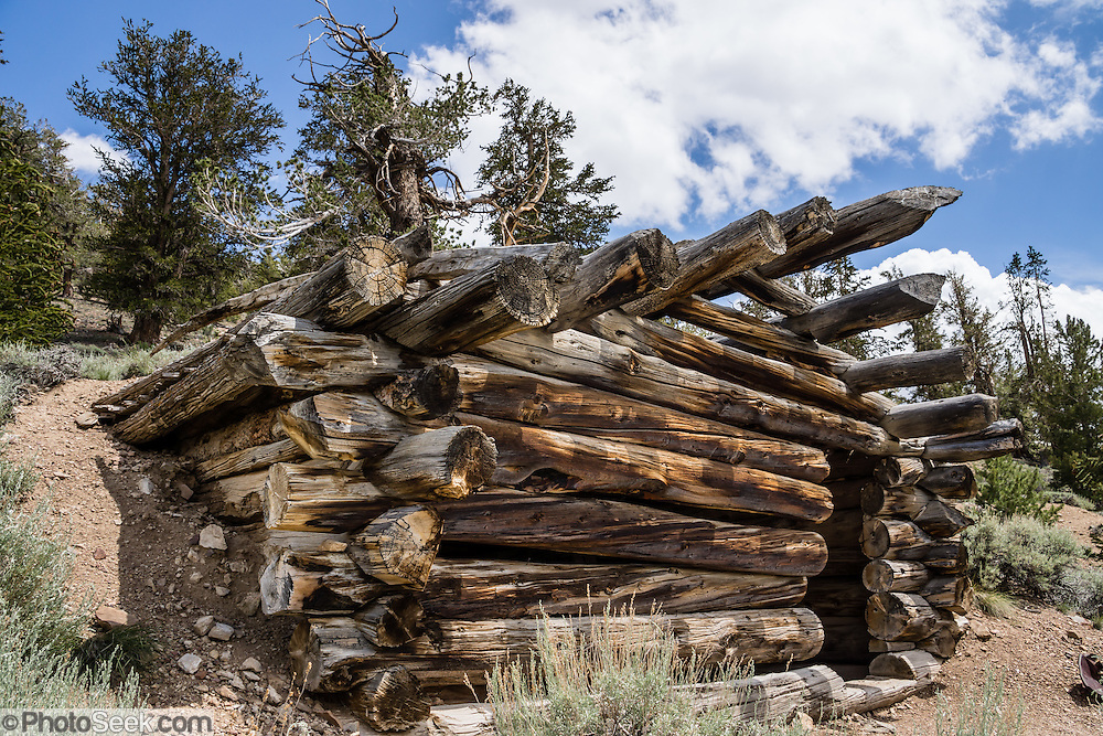 Along the Cabin Trail, see an historic mining cabin built of old-growth bristlecone and limber pine logs, in the Ancient Bristlecone Pine Forest, Schulman Grove, Inyo National Forest, White Mountains, near Big Pine, California, USA. In terms of its ancient logs, you can think of this as one of the world's oldest cabins. The Mexican Mine for extracting lead and zinc ore was first established in 1863 as the Reed Mine, but it suffered various weather and supply problems at 10,000 feet elevation and was abandoned in the early 1950s. The world's oldest known living non-clonal organism was found near here in 2013 -- a Great Basin bristlecone pine (Pinus longaeva) 5064 years old, germinated in 3051 BC. It beat the previous record set by the famous nearby 4847-year-old Methuselah Tree sampled around 1957. Starting from the visitor center at 9846 feet, we hiked the Cabin Trail loop, returning along Methuselah Grove Trail (highly recommended, to visit the world's oldest living trees), with views eastward over Nevada's basin-and-range region. An important dendrochronology, based on these trees and dead bristlecone pine samples, extends back to about 9000 BC (with a single gap of about 500 years).